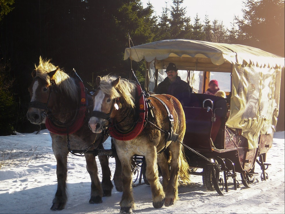 Pferdeschlittenfahrt in Oberhof mit dem Pferdefuhrbetrieb Nattermann
